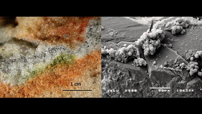 fungi mars ISS elektron mikroskop