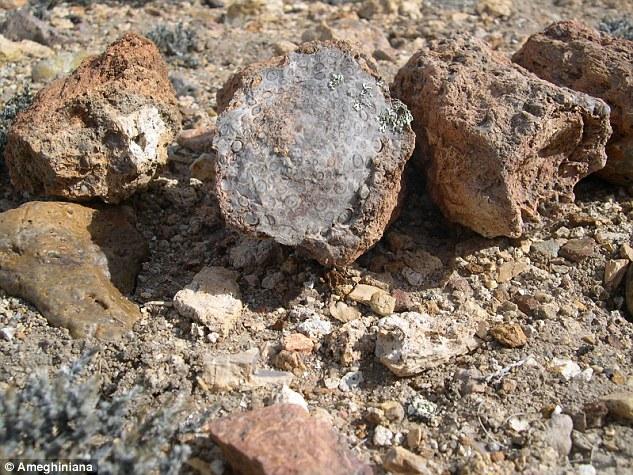 fosil arj