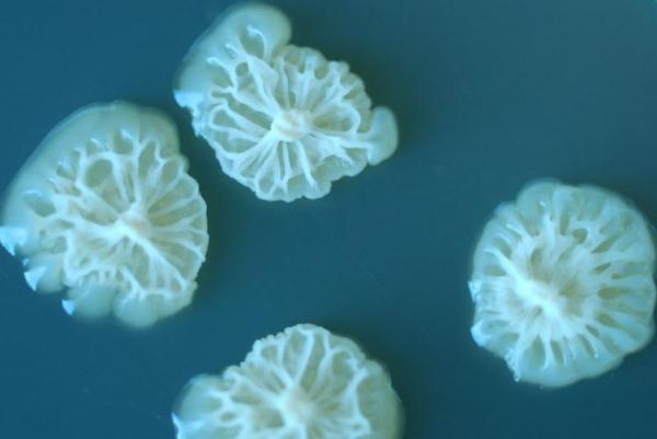 uzayda daha iyi üreyen bakter-gerçek bilim