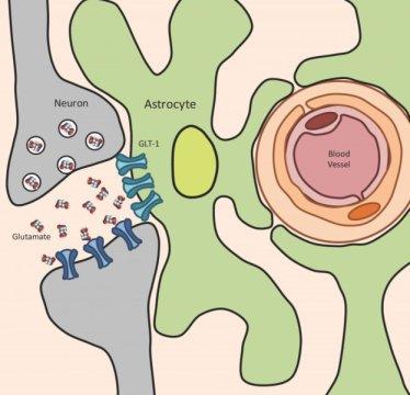 toksoplazma sinir hastalığı