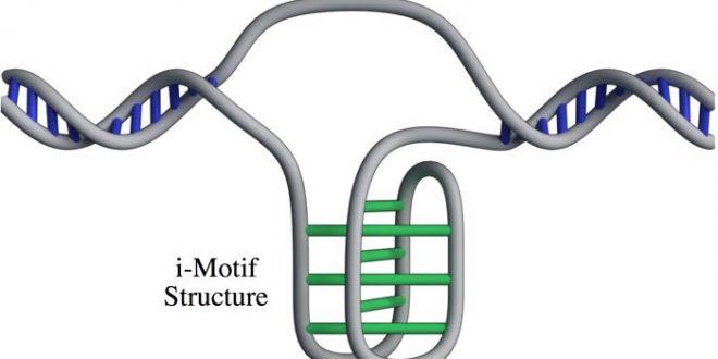 Bilim İnsanları, İnsan Hücrelerinde Yeni Bir DNA Yapısını Doğruladı