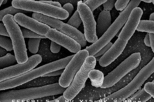 Araştırmacılar E.coli Bakterisinin Genlerini, Sentezlenen Genomla Değiştirdi