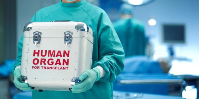 Yeni Metotla Organ Nakli Reddi Engellenebilir