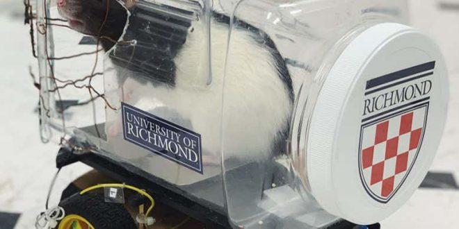 Bilim İnsanları Sıçanlara Araba Kullanmayı Öğretti