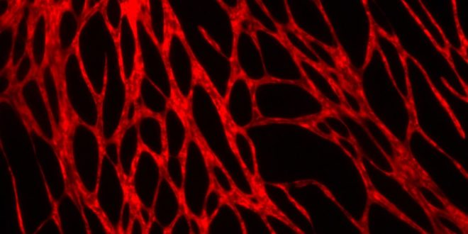 Bilim İnsanları 3D Biyoyazıcıyla Kan Damarlı Canlı Deri Bastı