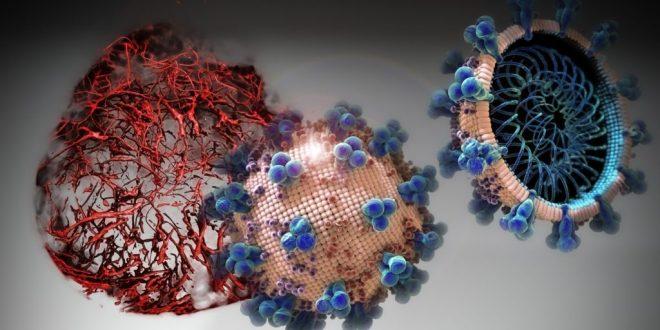 Organoidlerde Denenen Eşsiz Bir İlaç, COVID-19'u Başlangıçta Durdurabiliyor