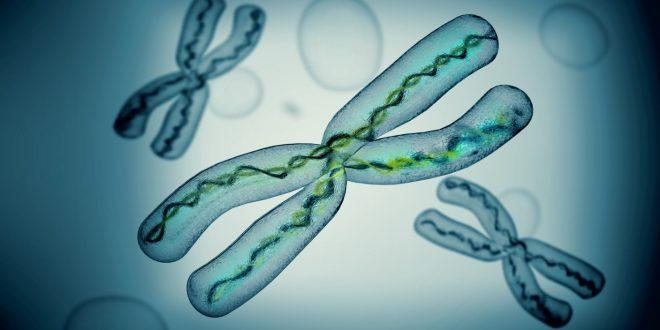 Bilim İnsanları, İlk Kez İnsan X Kromozomunun Tümünü Dizinlemeyi Başardı